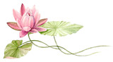 Fototapety Water Lily or lotus flower on the water (Fuchsia). Hand drawn, watercolor botanical illustration.