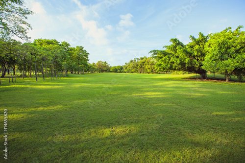 morning light in public park and green grass garden field ,tree