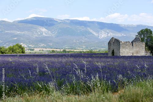 Foto op Canvas Lavendel lavandes en provence