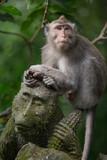 monkey in the Sacred Monkey Forest Sanctuary,Mandala Wisata Wenara Wana,Bali,Indonesia