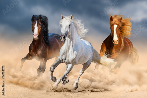 Poster, Tablou Three horse with long mane run gallop in desert