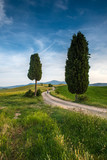 Woman is walking in a tuscan countryside