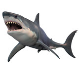 Great White Shark Isolated -The Great White shark can grow over 8 meters or 26 feet and live to 70 years of age.