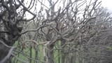 Background, branches without leaves in the garden