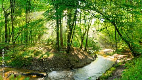 Wald mit Bach  bei Sonnenschein