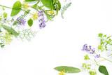 Fototapety variety of fresh herbs on white background