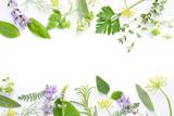 variety of fresh herbs on white background - 114852884