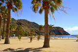 Playa De Las Teresitas beach, Tenerife, Canary Islands, Spain, Europe - June 14, 2016: Palm trees on Playa De Las Teresitas beach
