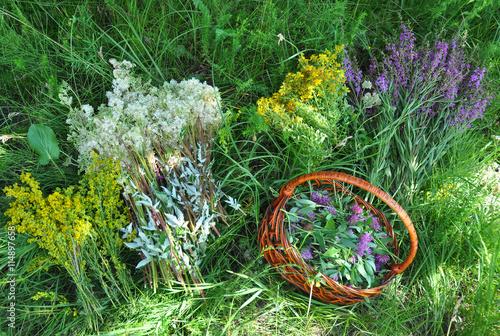 Gather Herbs. Herbal Plants. Hypericum perforatum, yellow bedstraw, St John's wort, Galium verum, Red Clowers , Filipendula ulmaria, meadowsweet is commonly used to make a sweet-tasting herbal tea.
