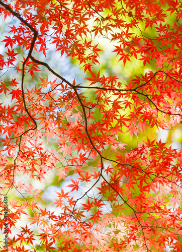Poster Rood traf. Beautiful colorful of autumn leaves in forest