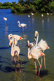 Exotic birds standing in Rhone Delta