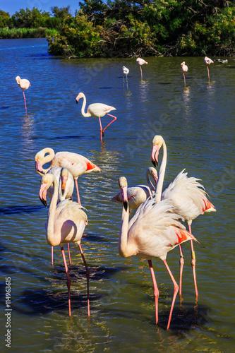 obraz lub plakat Exotic birds standing in Rhone Delta