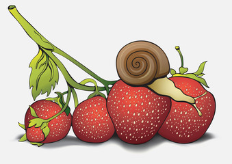 Snail on strawberries, cartoon pictures, hand-drawing. Can be used as a card, cover, print, design shirts, fabric, illustration for children's books. Vector illustration