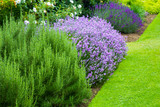 Beautiful, summer garden with blooming lavender and various plants - 115016680