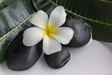 White flowers plumeria or frangipani in white tray and water