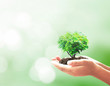 Human hands holding tree. Plant, Soil, CSR, Sprout, Child, Earth, Idea, Responsible, Trust, Learn, Fresh, Food, Wisdom, Insight, Ocean, Family, Grace, Attitude, Medical, Investor, Arbor, Big Concept.