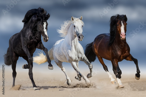 obraz PCV Three horse with long mane run gallop in sand