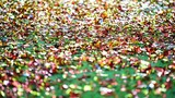 Detail with confetti on the ground after celebration moment