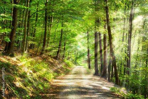 Fototapety, obrazy : Grüner Wald im Sommer mit Sonnenstrahlen