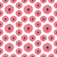 Seamless Floral pattern with pink zinnia flowers