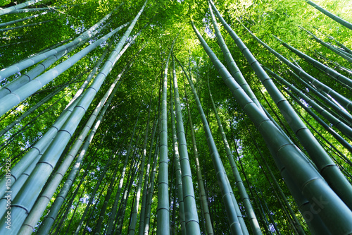 Bamboo forest of Arashiyama, Kyoto, Japan