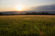 Sunset in Grassy Meadow