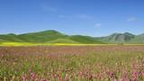 Altipiano fiorito Castelluccio