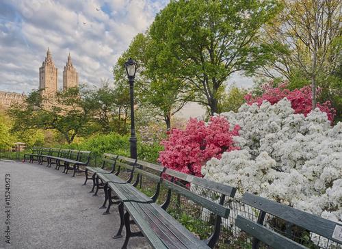 Zdjęcia na płótnie, fototapety, obrazy : Central Park, New York City Azaleas