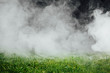 smoke over the green grass lawn