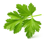 Parsley herb isolated - 115289289