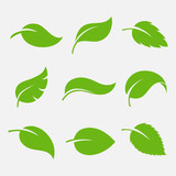 Leaves icon vector set - 115295213