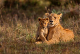 Lion mother of Notches Rongai Pride with cub in Masai Mara, Kenya - 115326668