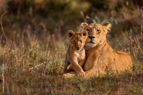 Lion mother of Notches Rongai Pride with cub in Masai Mara, Kenya Poster