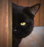 Black Cat with yellow eyes peeping from behind a corner