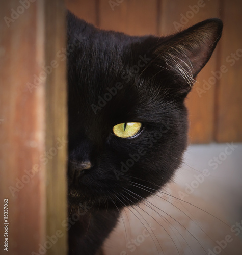 Tuinposter Panter Black Cat with yellow eyes peeping from behind a corner