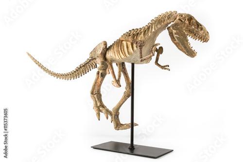 Poster Tyrannosaurus Rex skeleton