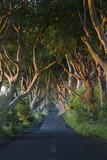 The Dark Hedges - County Antrim - Northern Ireland poster