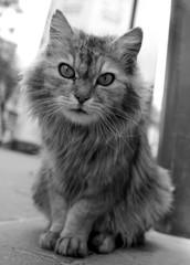 Street cat gray © 977_rex_977