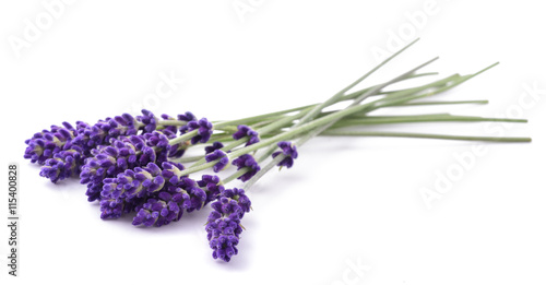 Foto Spatwand Lavendel Lavender flowers bunch