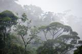 misty jungle forest - 115454891
