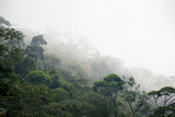 misty jungle forest - 115454893