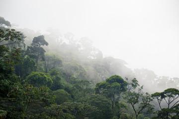 misty jungle forest