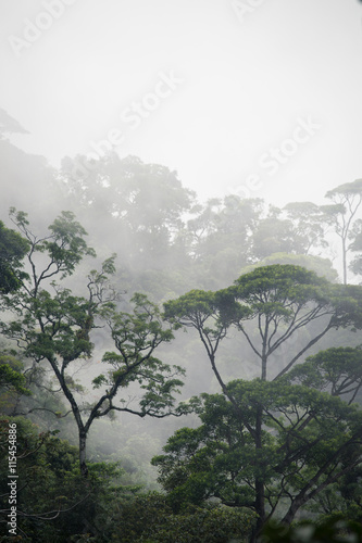misty jungle forest