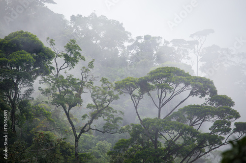 misty jungle forest - 115454891