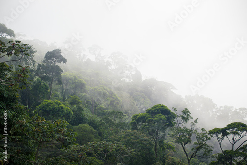 Fototapeta misty jungle forest