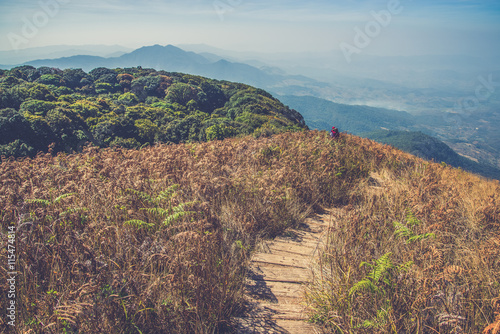 Fototapeta walkway in Alpine savanna grassland of Doi Inthanon, Chiang Mai,