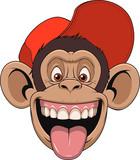 .Monkey head in a cap