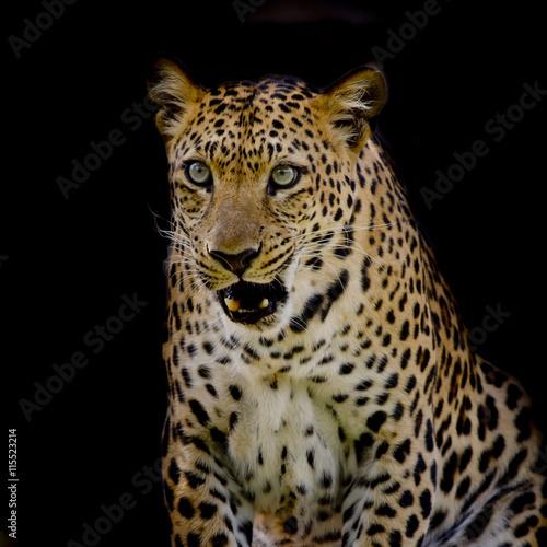 Poster Leopard portrait