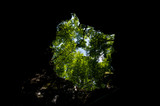 vista di alberi da una grotta a cielo apert parco di Plitvice