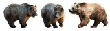 Set of 3 brown bears over white - 115562067
